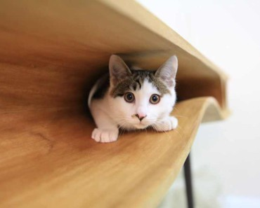 Modern-table-for-cats-5
